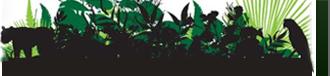Envía tu petición para conseguir una ley de Deforestación Cero